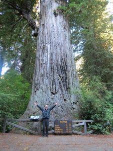 RvK-Redwood
